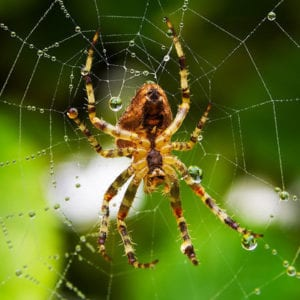 Get rid of spiders with EXCEL Termite & Pest Control